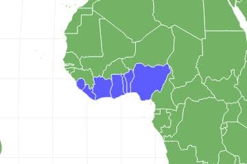 Giant African Land Snail Locations