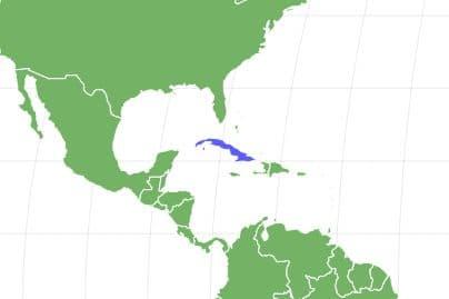 Havanese Locations