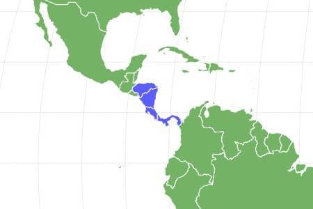 Honduran White Bat Locations