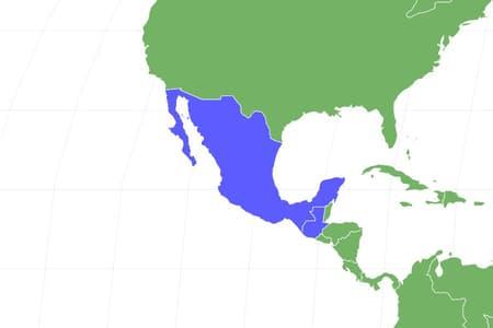 Mexican Alligator Lizard Locations