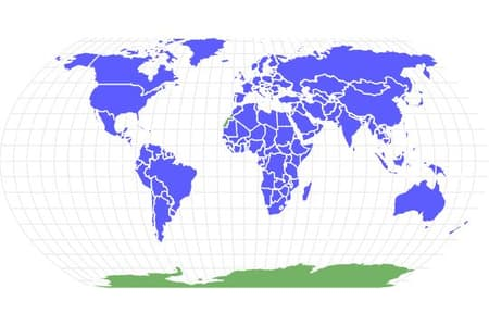 Rat Locations