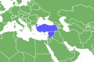 Syrian Hamster Locations