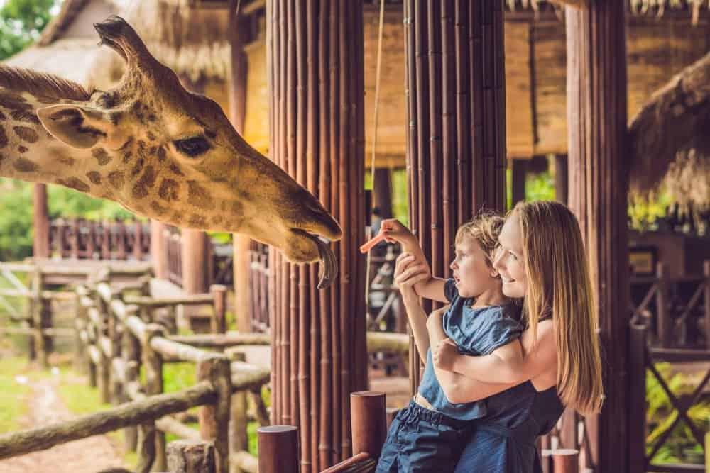 Una mujer y un niño alimentando a una jirafa en un zoológico.