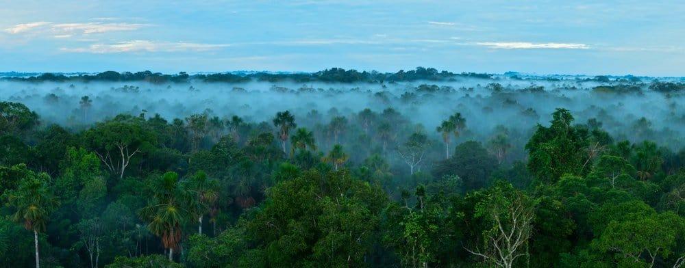 Una foto de la selva amazónica, tomada desde arriba de la línea de árboles.  La niebla se ha asentado justo debajo de la línea de árboles y hay nubes en un cielo azul.