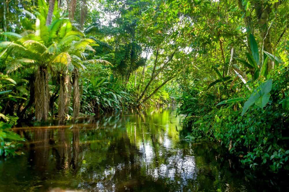 Un río angosto bordeado por una variedad de árboles y plantas verdes.