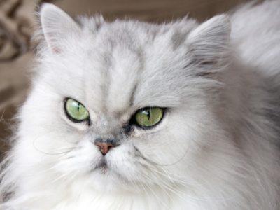 A Persian