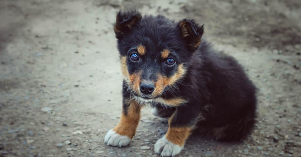 A mongrel puppy standing in the street