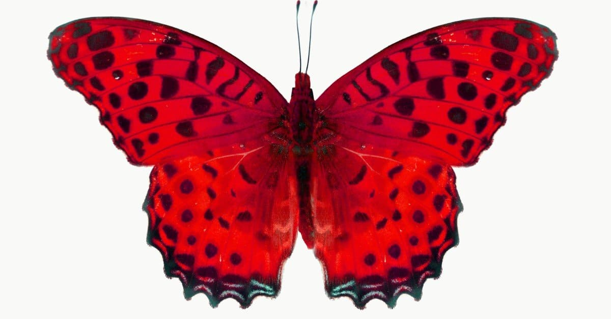 Butterfly Insect Facts - AZ Animals