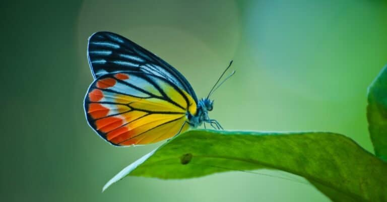 Beautiful butterfly sitting on a leaf.