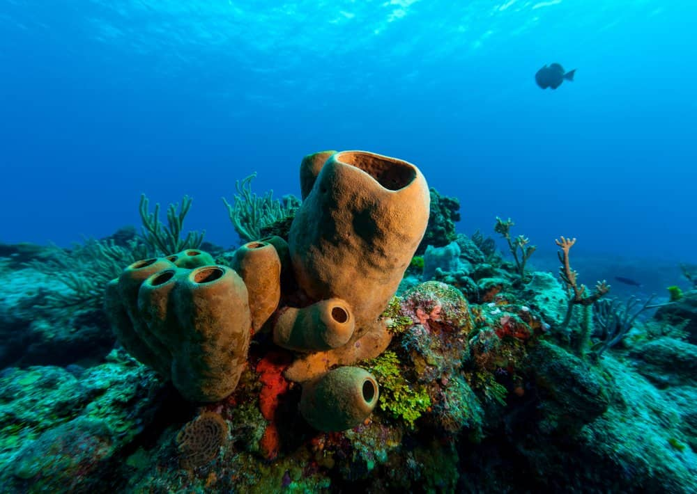A sea sponge on the ocean floor near coal.