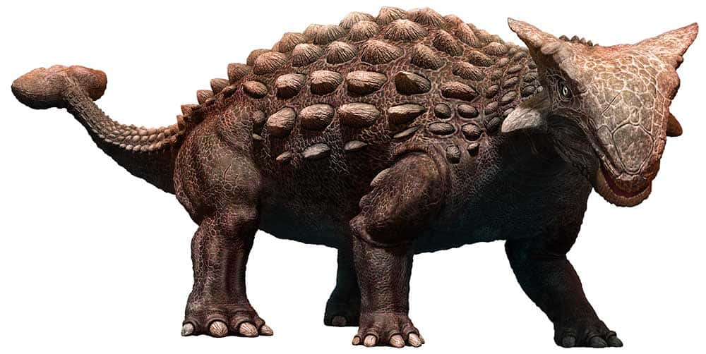 Un dibujo coloreado de un Ankylosaurus.