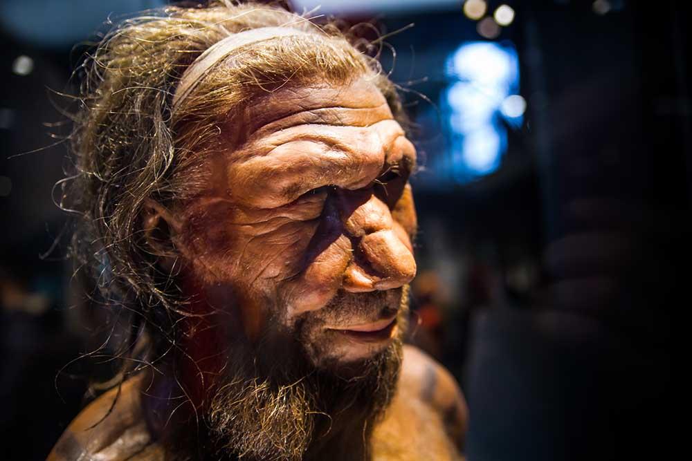 El rostro de un neandertal modelo.
