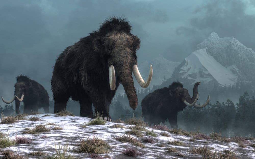 Una representación artística de tres mamuts lanudos caminando en un paisaje nevado con montañas al fondo.