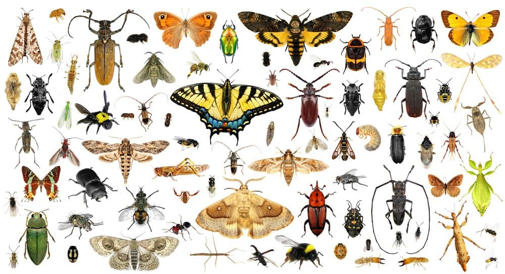 Various insects on a white background.