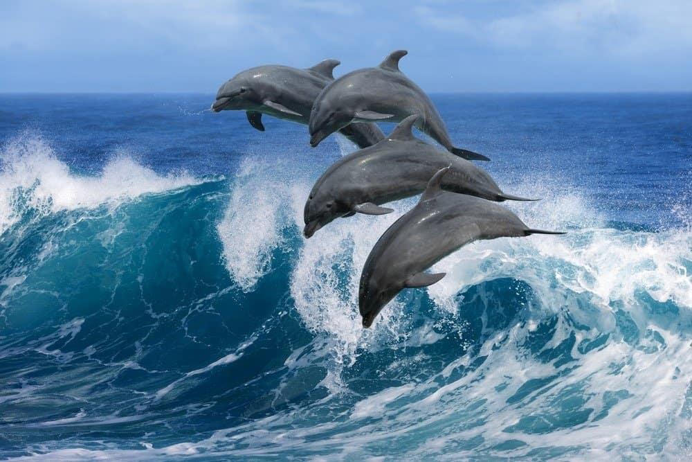 Cuatro delfines saltando en una ola en el océano.