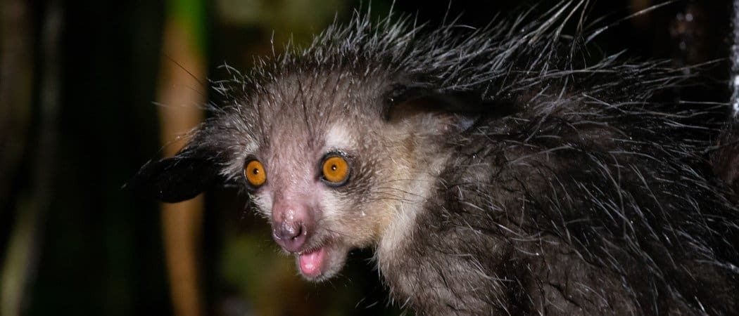 Strange Facts: The Worlds Ugliest Animals -Top 20