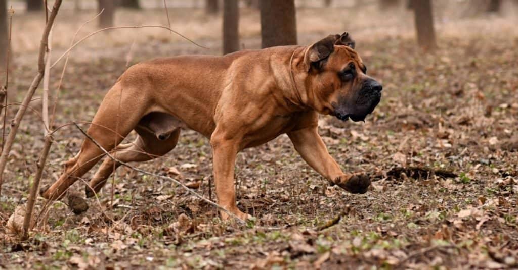 Best Dog Names: Unique Dog Names