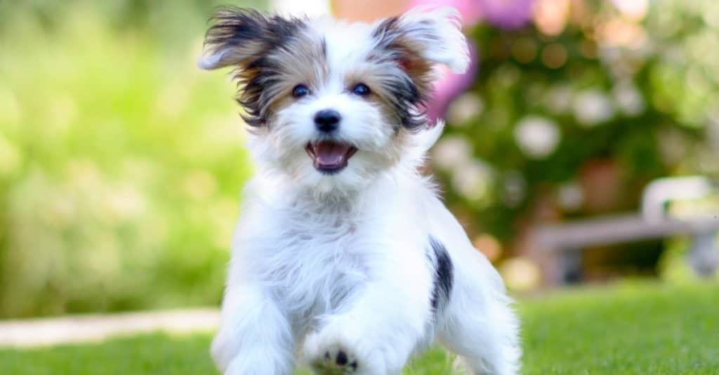 Best Dog Names: Kids' Choices for the Best Dog Names