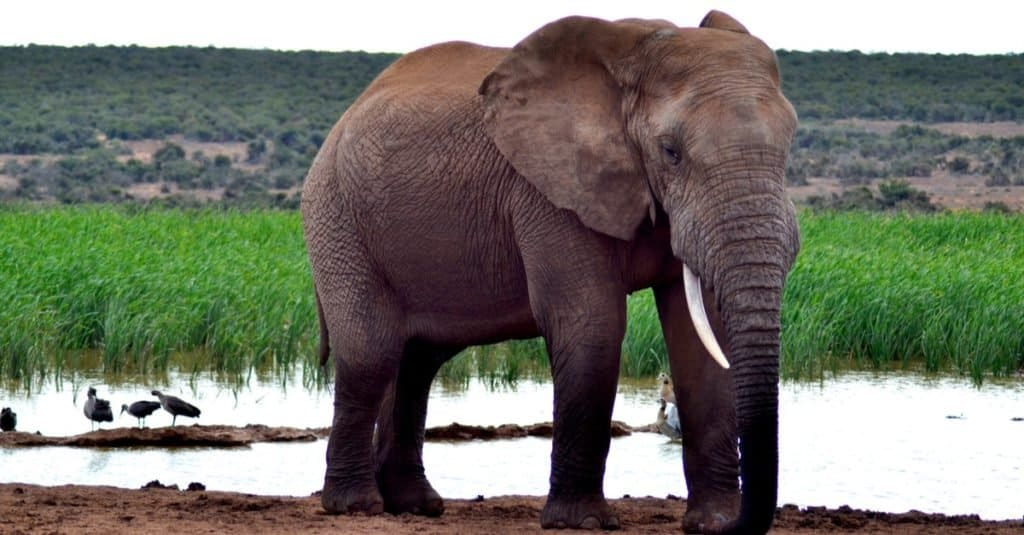 Smartest Animals – Elephants