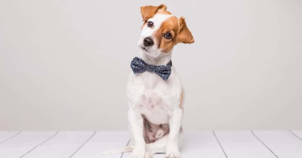 Best Dog Names: Modern Dog Names