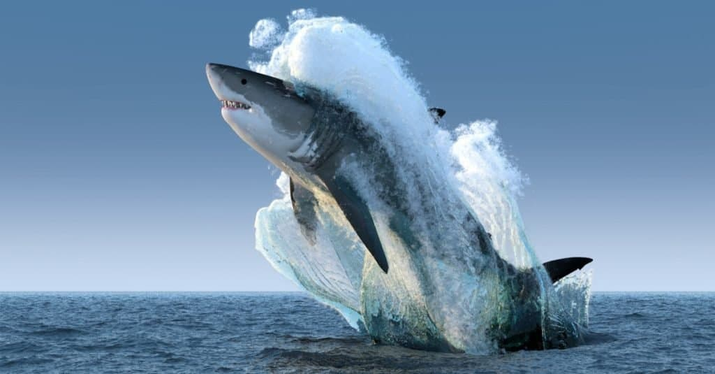 Biggest Fish in the World: Great White Shark