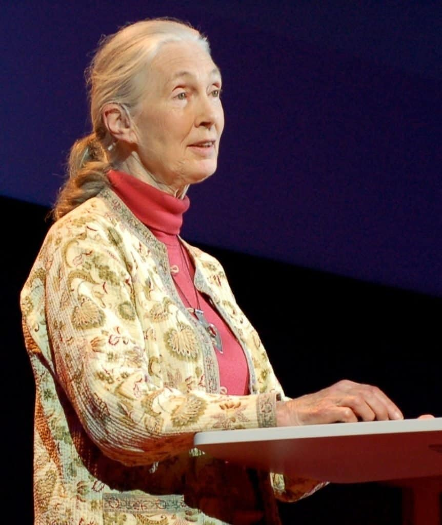 Famous Conservationists: Jane Goodall