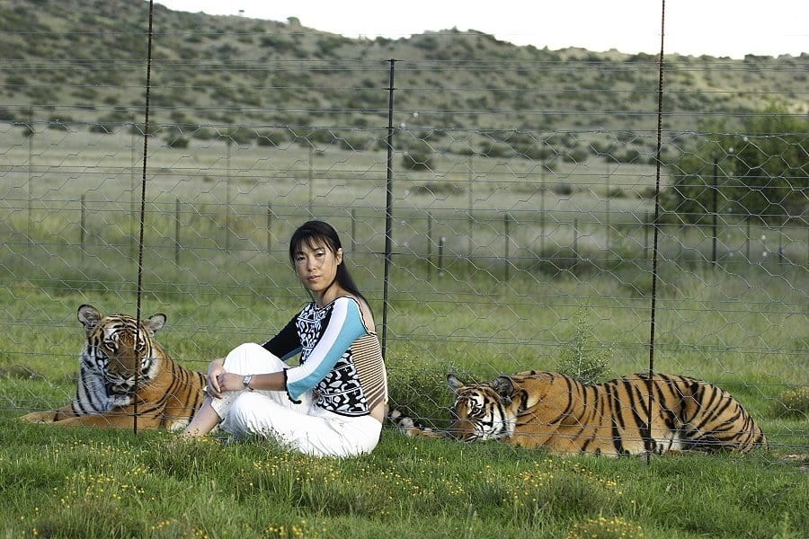 Famous Conservationists: Founder of Save China's Tiger, Li Quan