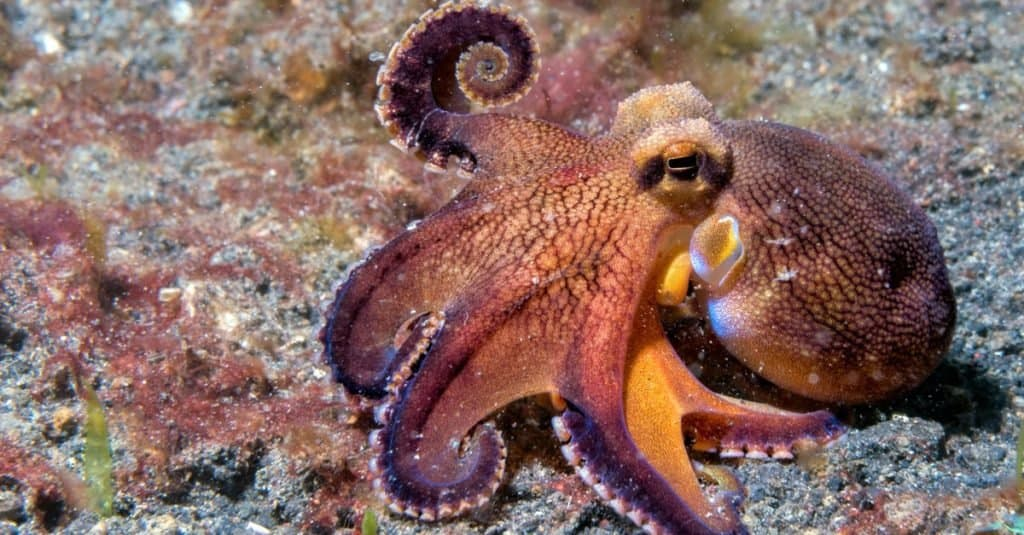 Smartest Animals – Octopi