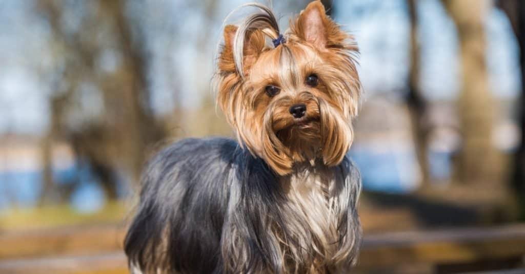Best Dog Names: Dog Names Based on Gender