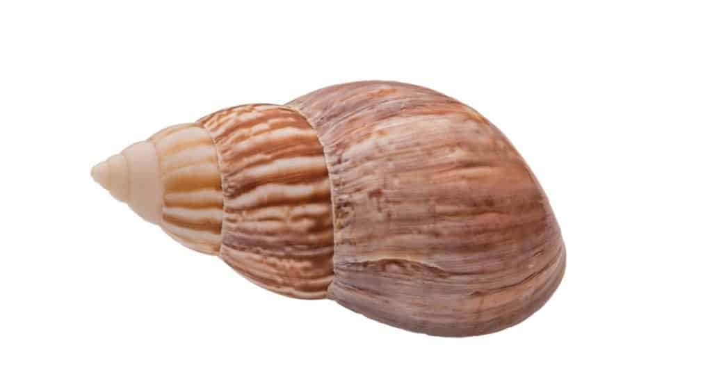 Dumbest Animals in the World: Japanese Land Snails