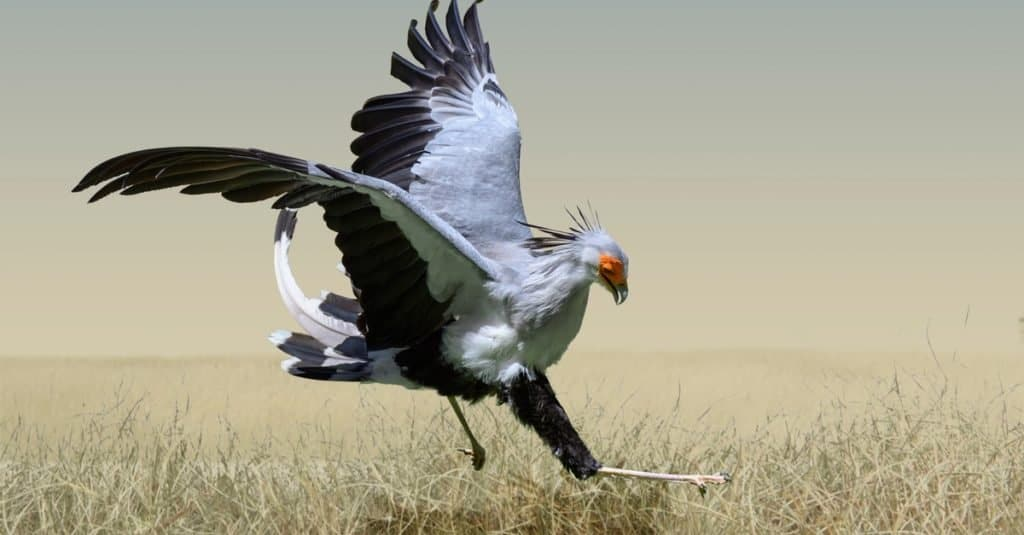 Dumbest Animals in the World: Secretary Bird