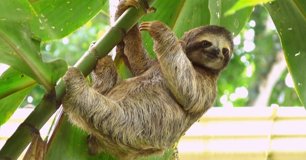 Dumbest Animals in the World: Sloth