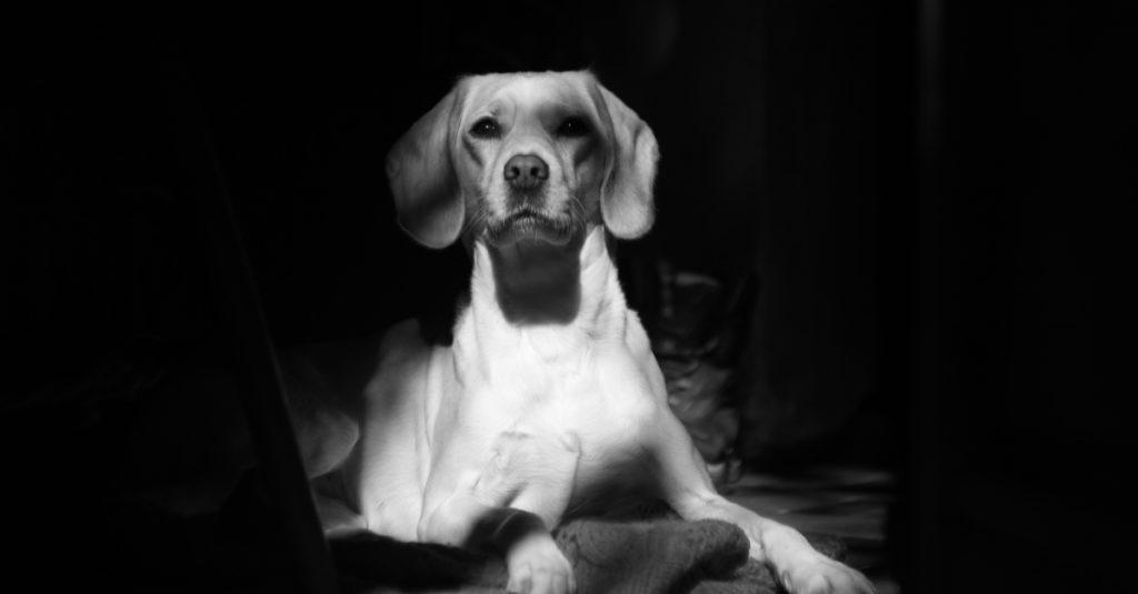 Spanador black and white image