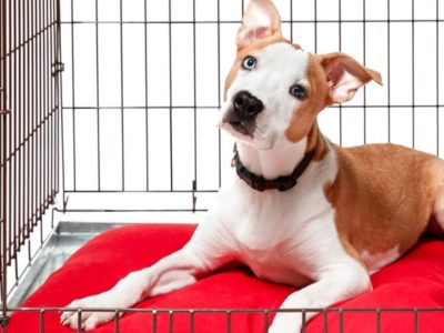 A The 6 Best Dog Crates: Reviewed for 2021
