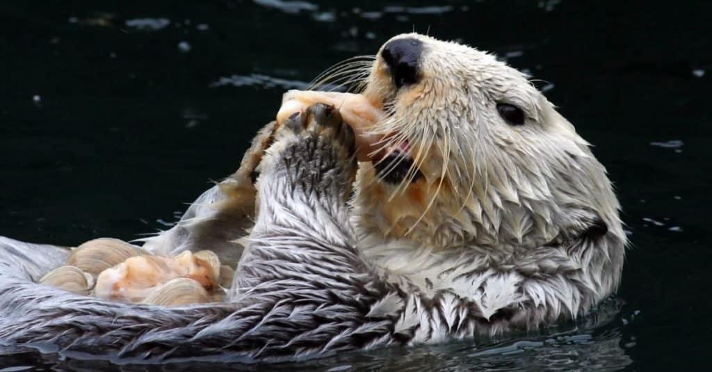 Animales más lindos: Nutria marina