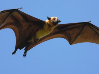 A The Top 10 Largest Bats in the World