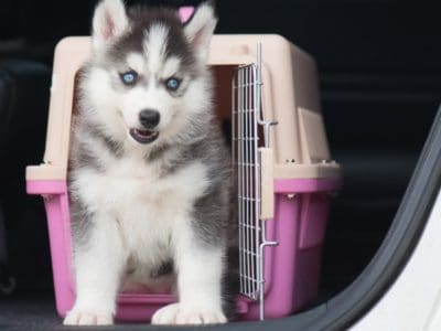 A The 5 Best Puppy Training Crates: Reviewed for 2021