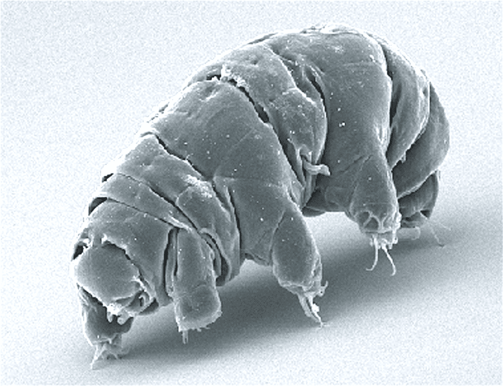 Weirdest Animals Tardigrade