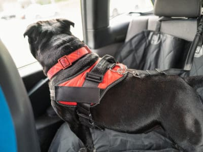 A Reviewed: The 3 Best Dog Seat Belts in 2021