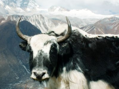 A The 10 Most Amazing Mountain Animals
