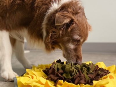 A The Best Snuffle Mat for Dogs in 2021