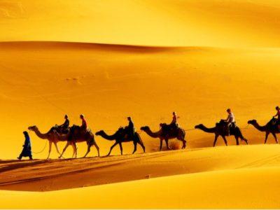 A The 10 Most Amazing Desert Animals