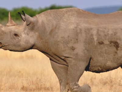 A Extinct Animals: 12 Species That Are Gone Forever