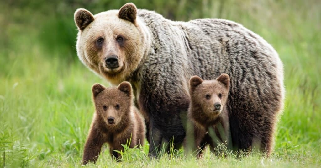 Favorite and Most Popular Animals: Bear