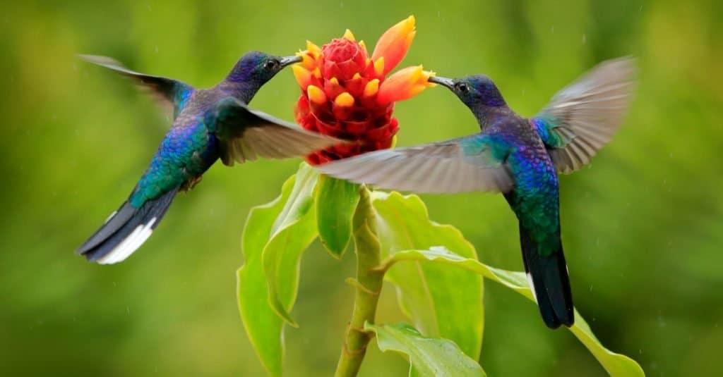 Animales favoritos y más populares: pájaro