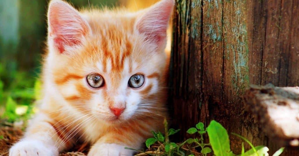 Animales favoritos y más populares: gato