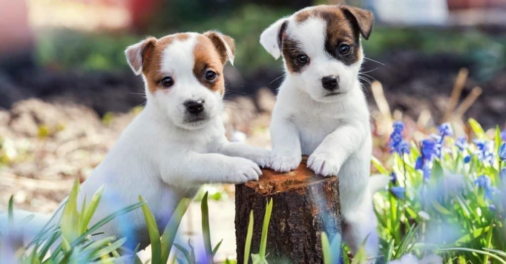 Animales favoritos y más populares: perro