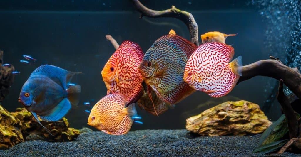 Animales favoritos y más populares: peces