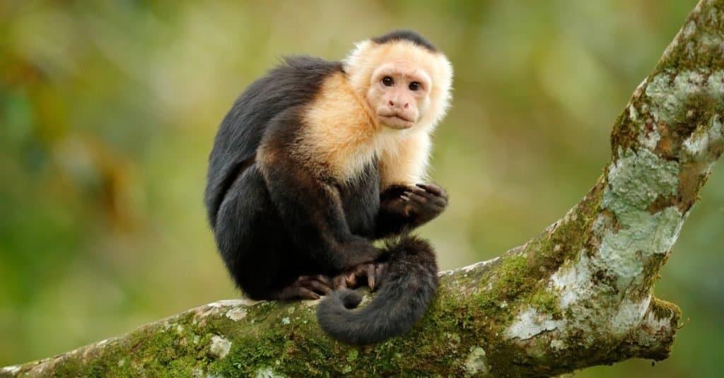 Animales favoritos y más populares: monos