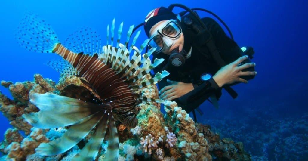 Trabajos divertidos con animales: biólogo marino